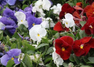 Plant i grupper