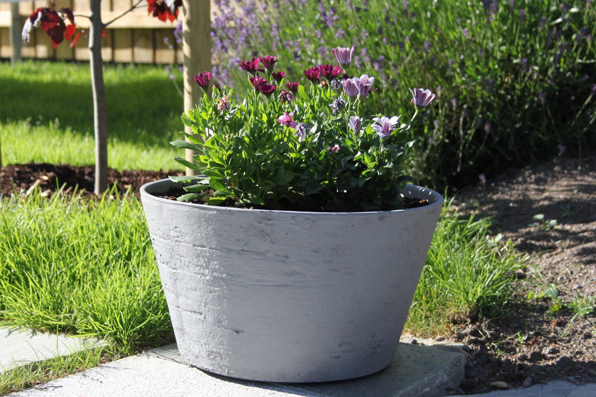 Planting i krukker